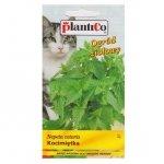 KOCIMIĘTKA nasiona kocimiętki 0,5 g PLANTICO