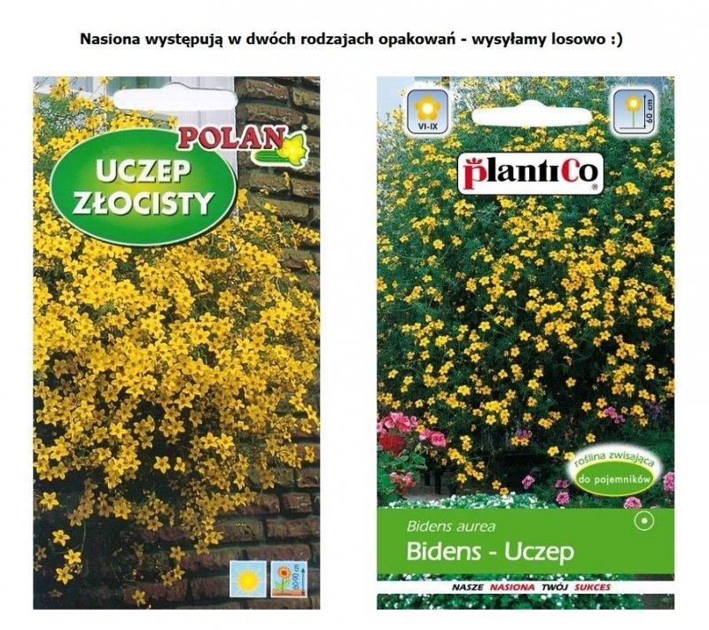 UCZEP ZŁOCISTY Bidens aurea nasiona kwiatów 0,2g