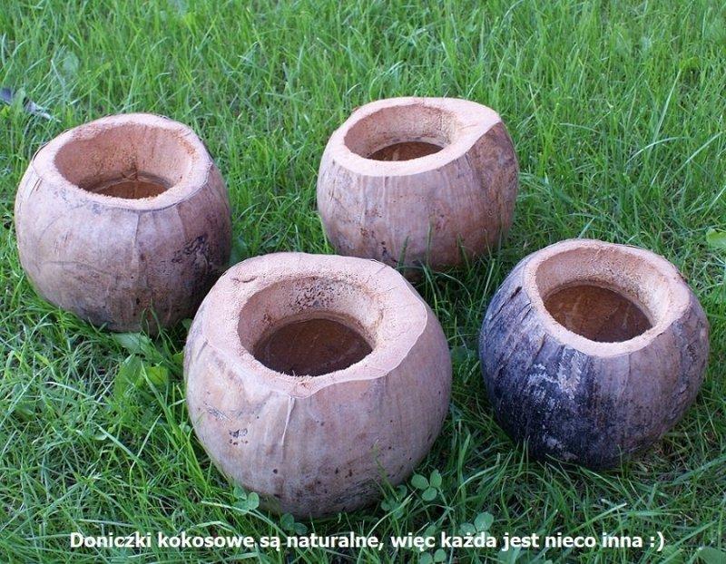 Łupina kokosa - doniczka kokosowa pionowa