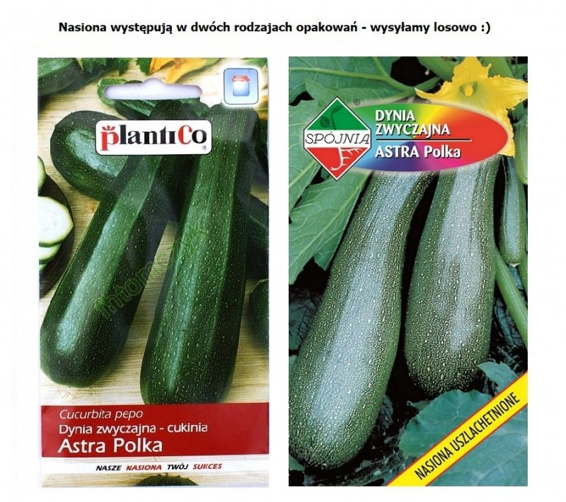 Cukinia ASTRA POLKA nasiona