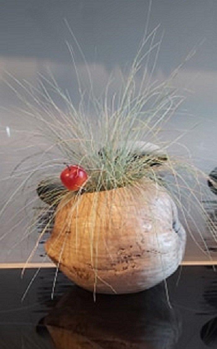 Trawa w łupinie kokosa