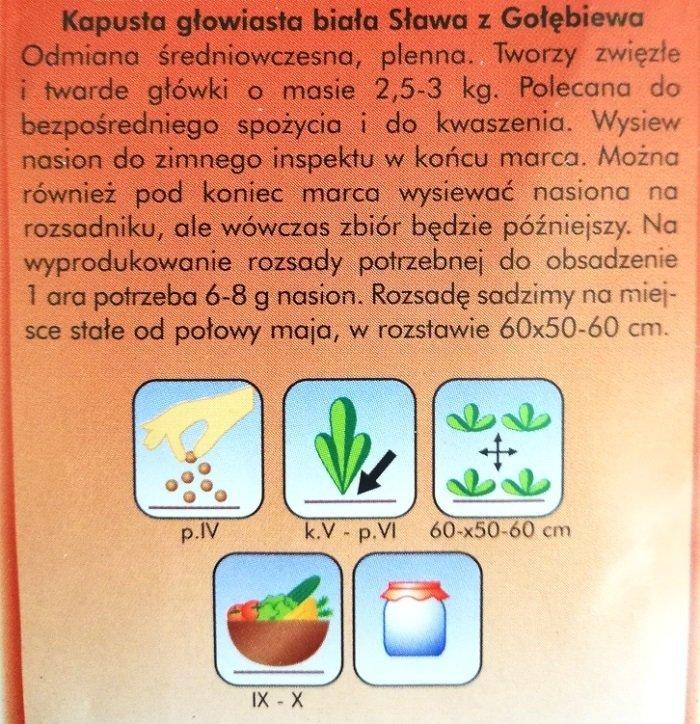 Kapusta SŁAWA Z GOŁĘBIEWA nasiona Plantico