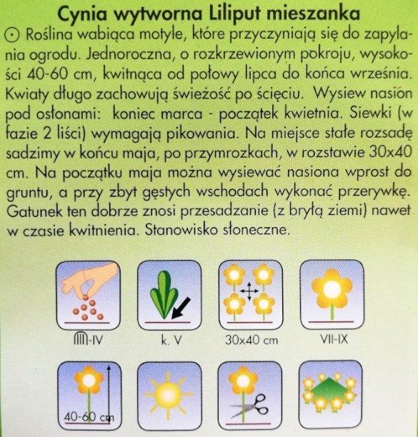 Cynia wytworna LILIPUT nasiona Plantico