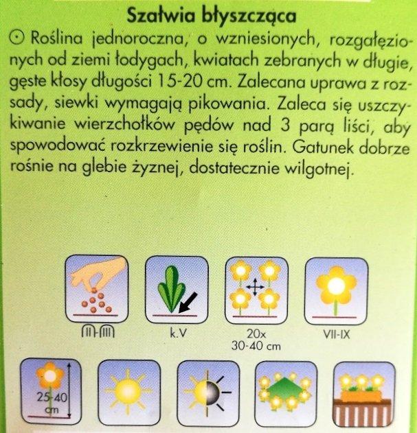 Szałwia błyszcząca czerwona nasiona Plantico