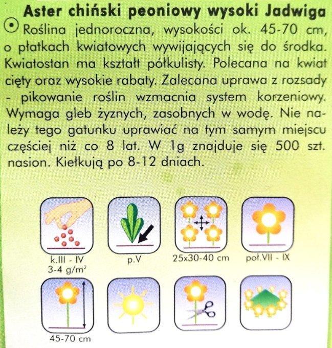 Aster peoniowy Jadwiga nasiona Plantico