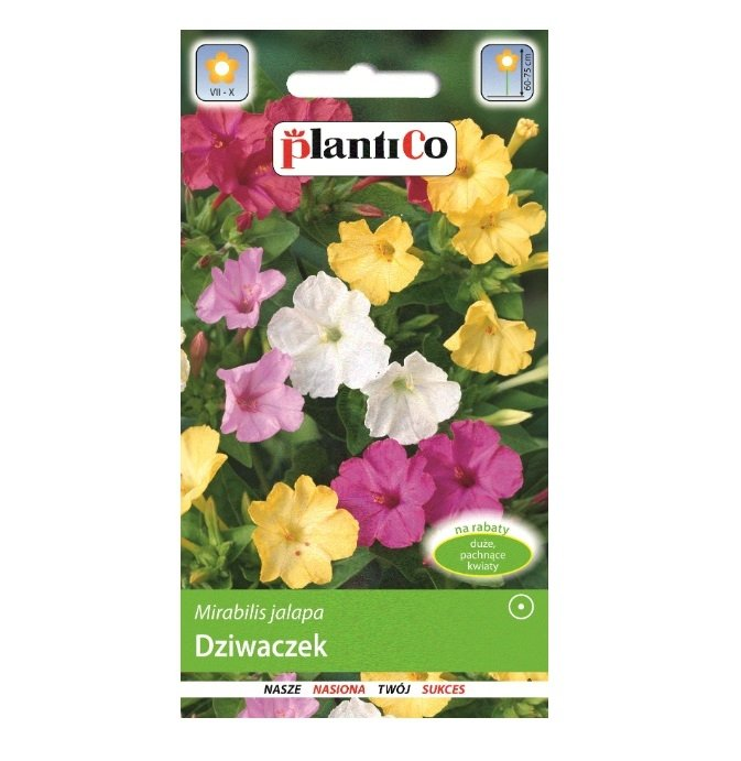 Dziwaczek nasiona Plantico