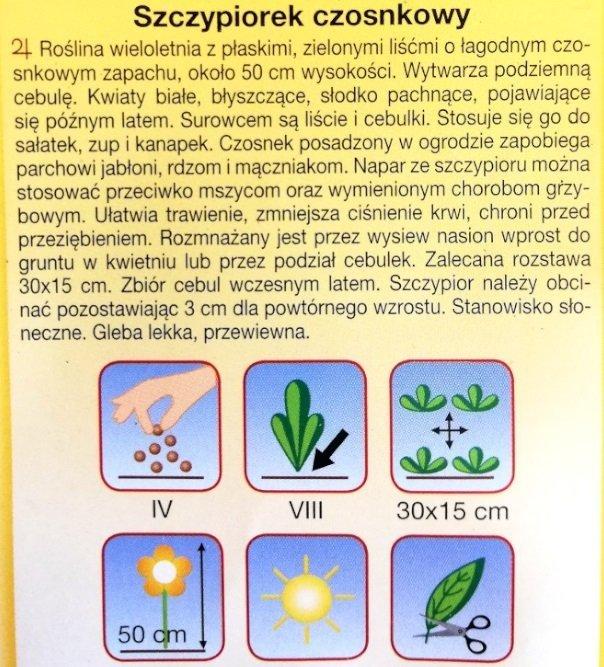 Szczypiorek czosnkowy nasiona Plantico