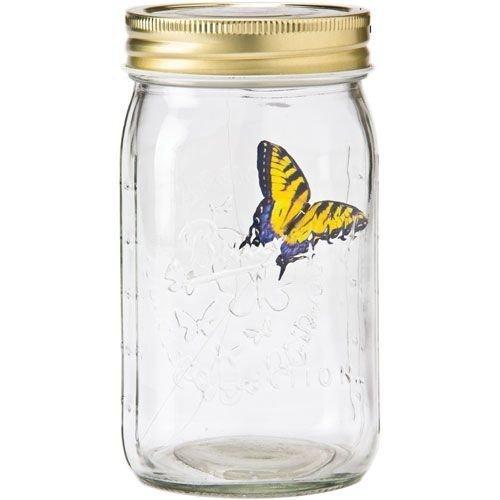 Motyl w słoiku - Paź królowej