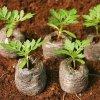 Krążki torfowe ekologiczna uprawa