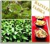 Aromatyczne liście bazylii