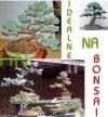 Świerk Srebrny Kujący (Picea pungens)