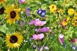 Jak założyć kwietną łąkę w swoim ogrodzie?