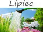 Kalendarz ogrodnika - Lipiec