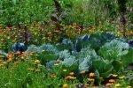 Permakultura – co to takiego? Jak stworzyć ogród permakulturowy?