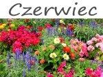 Kalendarz ogrodnika - Czerwiec