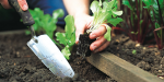 8 najczęściej popełnianych błędów w uprawie roślin!