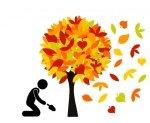 Sadz jesienią - wiosną podziwiaj !