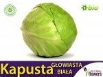 Kapusta głowiasta biała biała Roem van Enkhuizen 2 śr. wczesna (Brassica pleracea) XL 50g