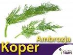 Koper ogrodowy Ambrozja (Anethum graveolens) XXL 500 g