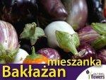 Oberżyna, mieszanka odmian (Solanum melongena) 0,5g