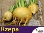 Rzepa jadalna Golden Ball (Brassica rapa var. rapa) 5 g