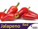 Papryka Ostra Jalapeno Czerwona (Capsicum annuum) 0,5g