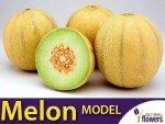 Melon Model (Cucumis melo) 1g