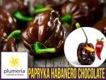 Papryka Chili HABANERO CHOCOLATE (Capsicum annuum) nasiona 0,15g