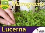 Microgreens - Lucerna siewna 4g