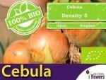 BIO Cebula DENSITY 5 nasiona ekologiczne 2g