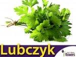 Lubczyk (Levisticum officinale) 0,5g