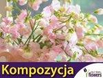 Kompozycja Różowych Roślin Jednorocznych 1 g nasiona