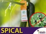 SPICAL Ulti-Mite na przędziorka do roślin domowych i wszelkich upraw 20 szt