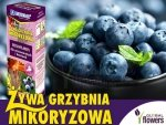 Mikoryza Grzybnia do Borówek i Wrzosowatych 250ml