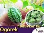 Ogórek ozdobny meksykański (Melothria scabra) 0,05 g  Nasiona