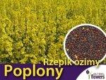 Poplony - Zielony Nawóz Ekologiczny - Rzepik ozimy Brachina (1000 g)