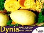 Dynia makaronowa Warszawska (Cucurbita pepo) XXL 500g