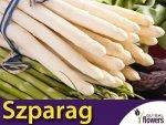 Szparag warzywny 'Argenteuil' ( Aspargatus officinalis) 1g