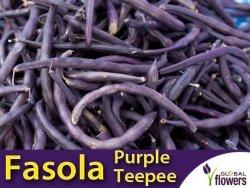 Fasola szparagowa karłowa fioletowostrąkowa Purple Teepee (Phaseolus vulgaris) XXL 1000 g