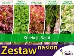 Kolekcja Sałat (zestaw 5 odmian) nasiona