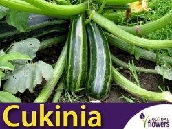 Cukinia NIMBA (Cucurbita pepo) nasiona 2g