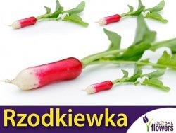 Rzodkiewka OPOLANKA (Raphanus sativus) nasiona XXL 500g