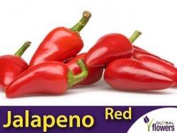 Papryka ostra JALAPENO Czerwona (Capsicum annuum) nasiona 0,5g