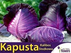 Kapusta Kalibos stożkowa (Brassica oleracea convar. capitata var. rubra) 0,5g