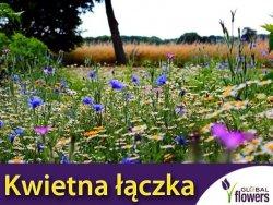 Kwietna łączka - mieszanka kwiatów polnych nasiona XXL 1kg