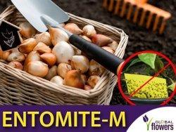 ENTOMITE-M 50 000 drapieżnych roztoczy (do zwalczania ziemiórek)