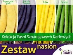 Kolekcja Fasol Szparagowych Karłowych (zestaw 4 odmian) nasiona