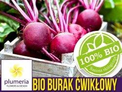 BIO Burak ćwikłowy DETROIT 2 nasiona ekologiczne 10g