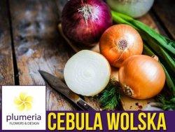 Cebula późna - Wolska nasiona 5g (Allium cepa)