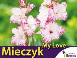 Mieczyk wielokwiatowy 'My Love' (Gladiolus) Cebulki 5 szt.